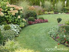 Ogród mały, ale pojemny;) - strona 103 - Forum ogrodnicze - Ogrodowisko
