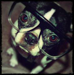 what DOES happen when a dog gets blurry vision?