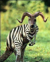 interesting animals | Interesting Animal | Cool stuff | Pinterest ...