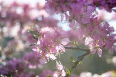 Shiny by Mami Shintani on 500px