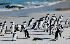 Full-Day-Best-of-Cape-Town-Private-Tours_01_lg