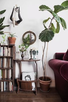 Bohemian apartment in Paris © Anna Malmberg amazing oversized plant in the living room