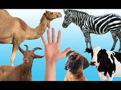 rhymes for children english children nursery kids rhymes collection kids online rhymes kids poems kids new latest animated nursery songs kids kindergarten. Finger Family Rhymes, Animals Dog, Pet Dogs, Giraffe, Goats, Camel, Cow, Funny, Felt Giraffe