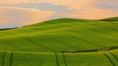 Preview wallpaper field, grass, summer, sky, beautiful 1920x1080