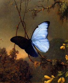 FORK TAILED WOODNYMPH HUMMINGBIRD BUTTERFLY FLOWERS MARTIN JOHNSON HEADE REPRO