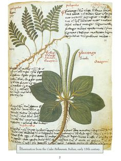 Dover Botanical Illustration excerpt 1