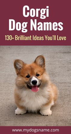 If you're looking for Corgi names, you're in the right place. We love helping pup parents find the perfect dog names. These Corgi dog names are stylish, sweet and a wee bit sassy!