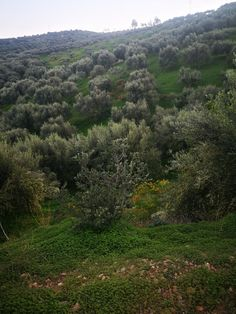 Join us at our last olive harvest in November 2020 Olive Harvest, Crete, Olive Oil, November, Join, Country Roads, Outdoor, November Born, Outdoors