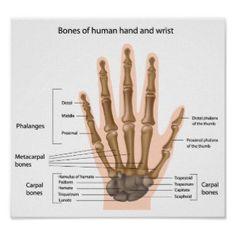 Bones of the hand Poster