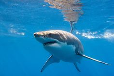 I want to swim with my favorite animal:)