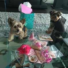 Look at that birthday spread filled with goodies from The Dog Bakery!  Happy 12th birthday Lulu!  Glad we could be a part of the celebration @lulu_lana_yorkiesisters