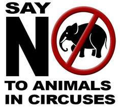 No to circus