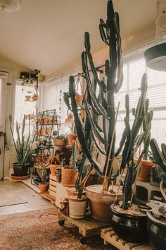 What do I do when he reaches the ceiling? - Free as a Bird Planting Succulents, Future House, Beach House, Ceiling, Indoor, Bird, Garden, Plants, Mexican