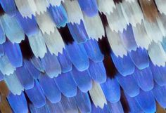 Micro-Photos of Butterfly wings 4