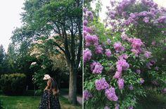 Enjoying the blooms at AssistensKirkegård #OdetteTravels