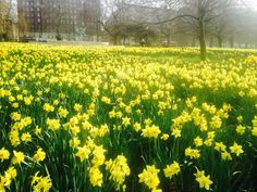 Spring London hyde park Easter flowers - Where Rosa likes to walk and see the…