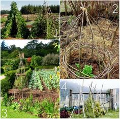 Tee pees!  > Pinterest Challenge: DIY Bean Teepee Garden Supports | 17 Apart: Pinterest Challenge: DIY Bean Teepee Garden Supports