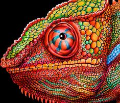 Chameleon 3 Colored Pencil Drawing. Signed by by TimJeffsArt