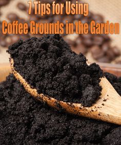 Don't toss those grounds into the trash — using coffee grounds in the garden can help create the garden of your dreams. Over time, that caffeine habit can generate a lot of coffee grounds. Don't toss those grounds into the trash — using coffee grounds in the garden can help create the garden of your dreams...