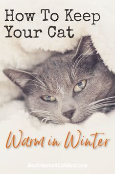 As the seasons change and temperatures drop, you are probably wondering how to keep your cat warm in winter. You are right to worry about your cat and wintery weather – and there are several ways to make sure your cat stays comfortable when it gets cold. We have rounded up the best tips for how to keep cats warm in winter so that you can rest assured that your feline friends are cozy. Heated Cat House, Heated Outdoor Cat House, Outdoor Cat Shelter, Heated Cat Bed, Outdoor Cats, Heating Pads, Cat Sweaters, Cat Beds, Warm In The Winter