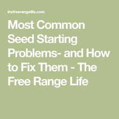 Most Common Seed Starting Problems- and How to Fix Them - The Free Range Life