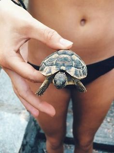 The popularity of tortoises as pets has increased over time. This is because they are silent, they do not shed any far and they are cute. They are most cute Summer Of Love, Summer Time, Summer Days, Summer Sun, Spring Time, Baby Animals, Cute Animals, Wild Animals, Tortoises