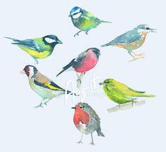 Watercolour British Birds   www.augustdesign.co.uk