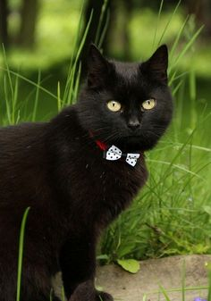 black cat with bow tie