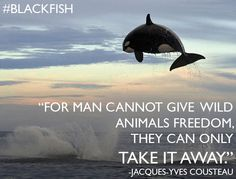 "MUST SEE DOCUMENTARY ""Blackfish"""