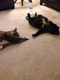 "My cats reenacting the ""Creation of Adam"""