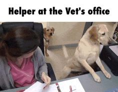 Helper at the Vet's office GIF is like one too please