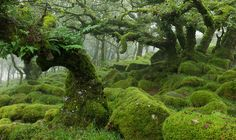https://supercurioso.com/un-bosque-de-misterio-y-fantasia-wistmans-wood/