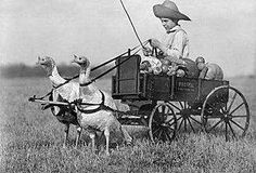 Boy in wagon pulled by Turkeys (I think)  Love this !!