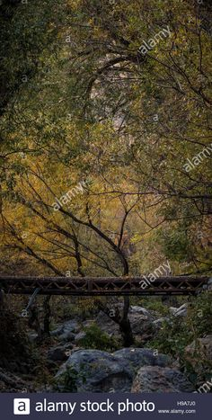 Download this stock image: little bridge - H9A7J0 from Alamy's library of millions of high resolution stock photos, illustrations and vectors.