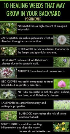 Remedies Natural 10 healing weeds that may grow in your backyard - People often kill weeds in their lawn and garden with toxic herbicides that are bad for the environment. Some weeds are actually healing weeds. Healing Herbs, Medicinal Plants, Natural Healing, Natural Health Remedies, Herbal Remedies, Psoriasis Remedies, Holistic Remedies, Cold Remedies, Herbal Medicine