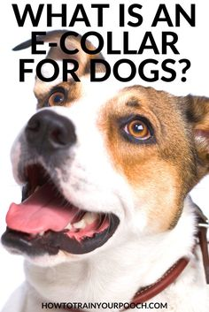 What Is an E Collar for Dogs? - How to Train Your Pooch Best Bark Collar, Anti Bark Collar, Dog Training Equipment, Best Dog Training, Training Tips, Bark Collars For Dogs, Electronic Dog Collars, E Collar Training, Dog Shock Collar