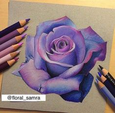 50 Beautiful Color Pencil Drawings from top artists around the world Violet rose drawing by artbymac Drawing Tips, Painting & Drawing, Drawing Ideas, Coloured Pencils, Coloured Pencil Drawings, Color Pencil Art, Colour Pencil Shading, Art Techniques, Cool Drawings
