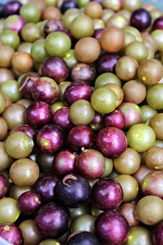 Purple and Gold Southern Muscadine Grapes | Oysters & Pearls