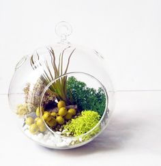 20 Ideas de terrarios DIY | Plantas