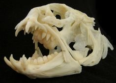 Cat Skull by nikkiburr | Cabinet of Curiosities | Pinterest | Cat ...