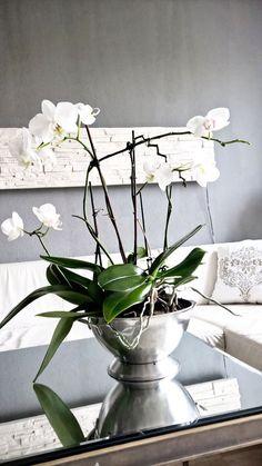 fensterrahmen bef llt mit kerzen leuchten und orchideen fensterdeko innen und au en. Black Bedroom Furniture Sets. Home Design Ideas