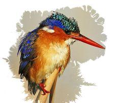 Pták ledňáček Kingfisher Watercolor vodové barvy pohyblivý animovaný obrázek gif animace zdarma stažení Kingfisher, Lots Of Money, Watercolor, Pen And Wash, Watercolor Painting, Common Kingfisher, Watercolour, Watercolors, Watercolour Paintings