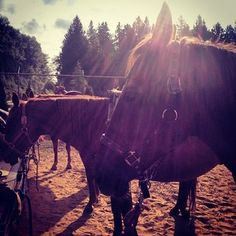 Horseback Riding is a favourite pastime #langley Instagram photos | Webstagram - the best Instagram viewer