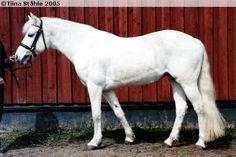 Connemara - mare Cluain Afrodite