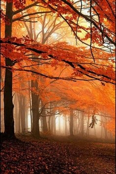 Jeweled beauty ...  a misty Autumn forest encased in amber.