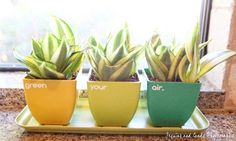 green your air plants! Air Purifier Reviews, The Right Stuff, Snake Plant, Best Budget, Shopping Spree, Go Green, Retail Therapy, Air Plants, Beautiful Gardens