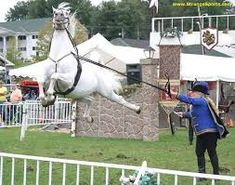 Horse Riding Fails - Barnorama Funny Horses, Cute Horses, Horse Love, Horse Fly, Horse Riding, Equine Photography, Wildlife Photography, Wierd Pictures, Horse Balloons