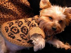 dog sweaters knitting patterns - Buscar con Google
