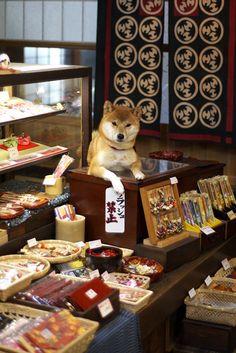 Shiba Inu in Japanese shop