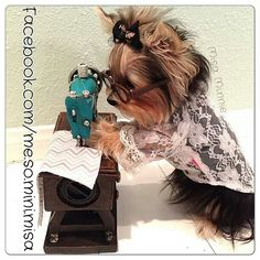 Does your Yorkie have a hobby? ⋆ It's a Yorkie Life Yorkies, Yorkie Puppy, Maltipoo, Yorky Terrier, Yorshire Terrier, Cute Puppies, Cute Dogs, Dogs And Puppies, Cute Funny Animals